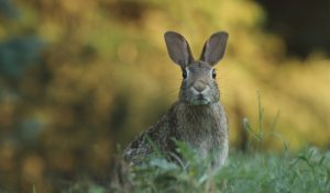bunny vet