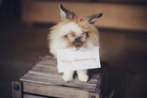 rabbit trick valentines